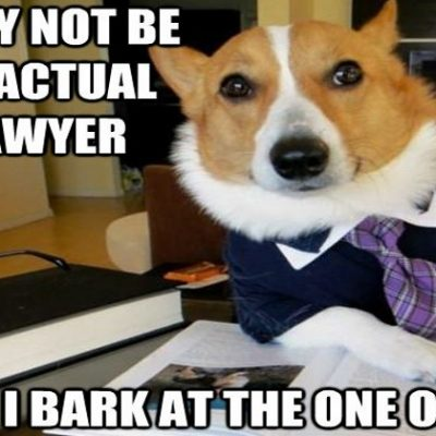 Lawyer-Dog-first3