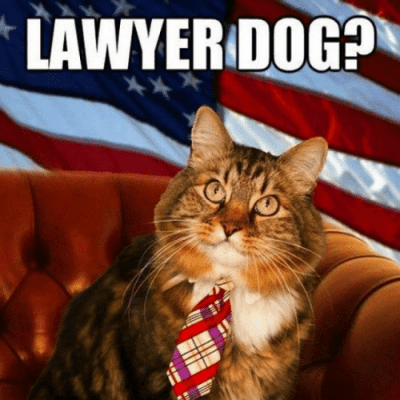 lawyerdogh-hes-guilty-of-purrrrr-jury-lawyer-cat-27981935